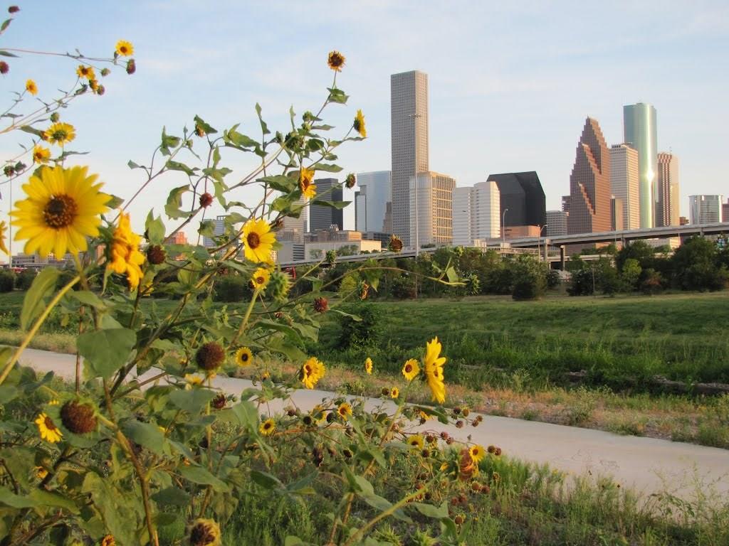 2128 White Oak Drive Houston, TX 77009